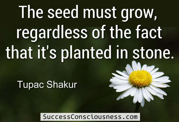 The Seed must Grow